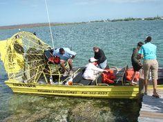 Bahamas eco tours airboat #Bahamas Ecoventures