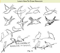 How To Draw Guide - How To Draw Animals
