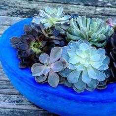succulent container gardening