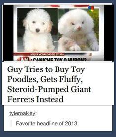 Favorite headline of 2013…