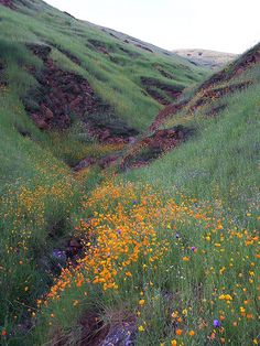 Fresno County Wildflowers fresno counti, impressionist paintings, mountain, purple flowers, orange flowers, poppi, flower fields, place, natural beauty