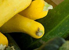 squash & zucchini recipes zucchini recip