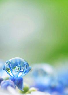 blue, water drop