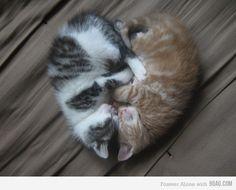 cute funny animals, kitty cats, valentine day, funny cats, heart shapes, baby animals, kittens, kitti, cat photos