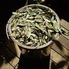 CONGESTIÓN NASAL: se necesita, una cacerola, agua, hojas de eucalipto y paciencia.    Hervir el agua con las hojas de eucalipto y tapar la olla con la toalla.    Asomar la cabeza por la toalla y respirar todo el vapor que sale.    Pd: También sirve para limpiar el rostro de puntos negros e impureza. Enviado por vsalrod