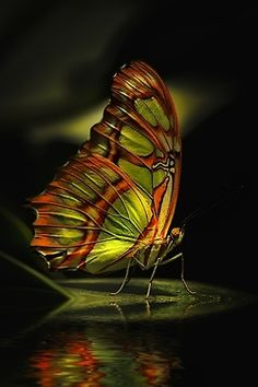 butterfli, photograph, orang, color combos, art, butterfly wings, insect, stained glass, beautiful creatures