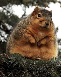 OMG....a little too many nuts????
