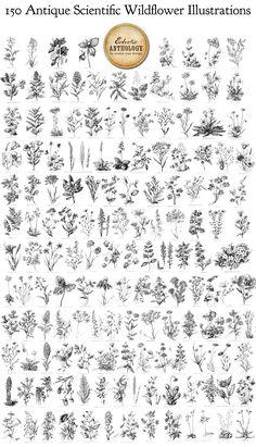 wildflower botanical illustrations - mmmmm, tattoo goodness