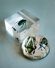 Insect Paper weights as seen in the Absinthe Vignette at Paris on Ponce $15