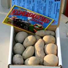 container gardening picture of organic seed potatoes for growing in container gardens