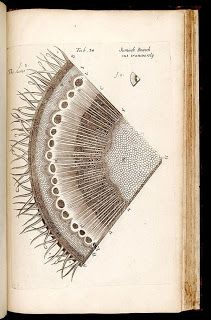 Biodiversity Heritage Library: Book of the Week: The Birth of Microscopic Plant Anatomy