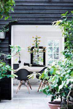 black eames chairs