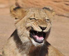 Imágenes graciosas de animales