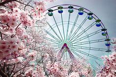 cherri, pastel, pari, pink, ferri wheel, ferris wheels, inspiration quotes, flower, cherry blossoms
