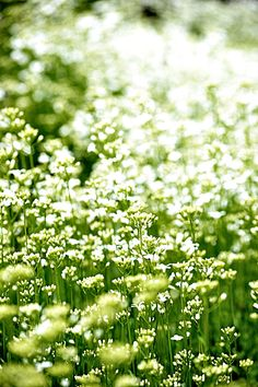 spring meadow... http://www.pinterest.com/emmagangbar/boards/