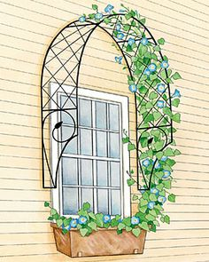 around the window?? LOVE IT!!! Chateau Arbor and Trellis