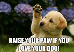 I love my dogs berri, cats, puppies, hero, dogs, dog lovers, dog training, hands, funny quotes