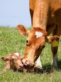new life on the farm....