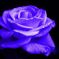 ~~ Evening Blues ~~