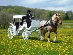 horse wagons - Google Search amish, field, hors drawn, horse farms, wagon, bucket list3, black horses, horsedrawn carriag, country