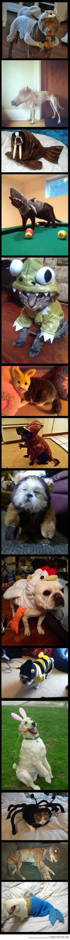 Animals dressed as other animals…