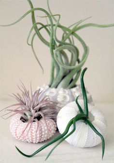 air plant, freedom, nature, grows, natural color combos, inspired by nature