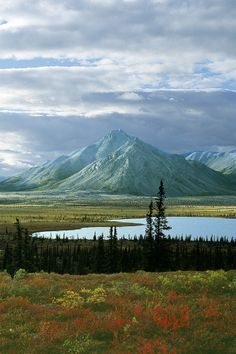 Sheenjek River Valley, Arctic National Wildlife Refuge - Alaska