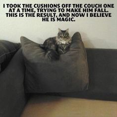 funny animal pictures (37)