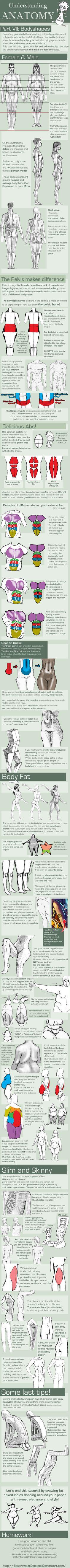 Understanding Anatomy: Body Shapes