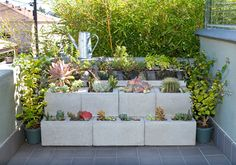 we created a little succulent and herb garden using cinder blocks and a wood frame. Mixed succulents populate the interior, while herbs we often use in cooking are housed in grout troughs on the top row. Jasmine plants flank the arrangement.