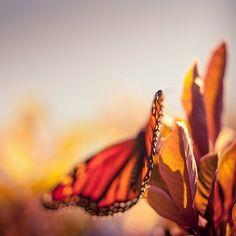 #orange #butterfly