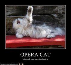 Opera cat sings your favorites