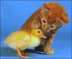 kitty & ducky