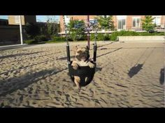 ▶ 015: On A Swing / French Bulldog, Jean-Claude (JCVDog) - YouTube