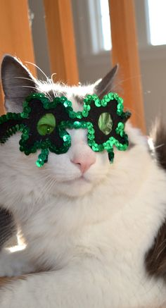 St. Paddy's Kitty Glasses
