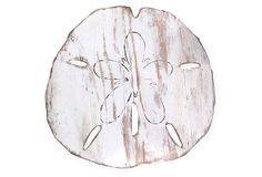 """24"""" Giant Sand Dollar Decor on OneKingsLane.com. by Gregory Morris at Slippin' Southern"""