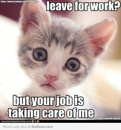 ...you're job is taking care of me.