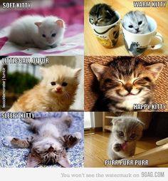 soft kitty with real kitties! I love Big Bang Theory!