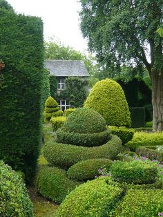 Beautiful topiary at an english cottage