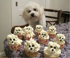 at home, big cake, birthday parties, birthdays, food, pup cake, doggi cupcak, decorative cupcakes, decad dessert