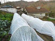 Your Living Refrigerator: Low Tunnels