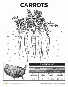 Gardening Coloring Page/Planting Guide for J's Gardening Journal