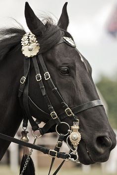 Cavalry Black of the Household Cavalry