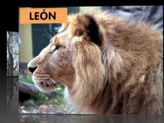 Learn Spanish with Video Vocabulary: Animals