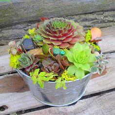 Succulent Dish Garden with a garden creature.