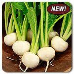 Organic Tokyo Market Turnip
