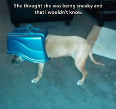 """The face of a defeated dog…  Caught eating """"dog chocolates."""""""