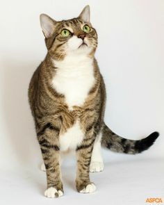 Our Pet of the Week is Jenny! Playful Jenny loves your attention and is well known at our shelter for her amusing antics. She would love a quiet home to be your companion. Take home this 8 year-old cat today! http://www.aspca.org/blog/aspca-pet-week-jenny
