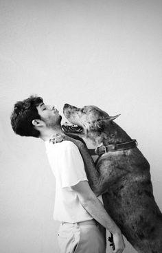 great danes, a kiss, dog photos, woodland creatures, pet photos