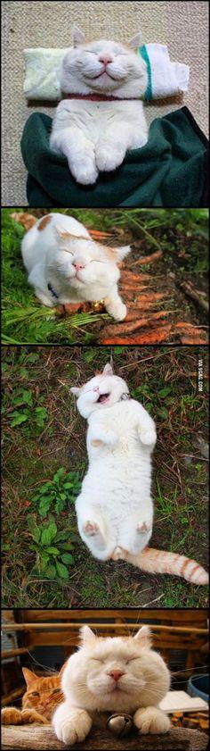 Joyful cat